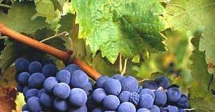 Rota de Vinho em Portugal